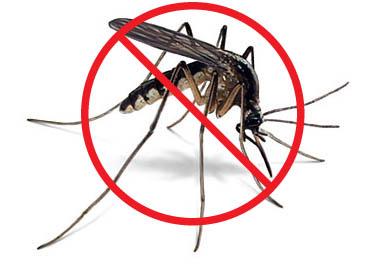 no_mosquito